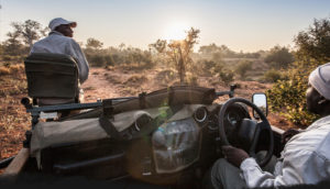 Game drive with Garonga Safari Camp in Makalali, South Africa