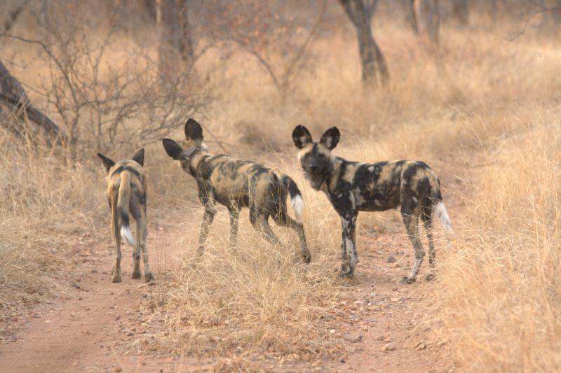 Garonga Safari Camp, Greater Makalali Private Game Reserve, Safari Camp Stories, Wildlife Sightings