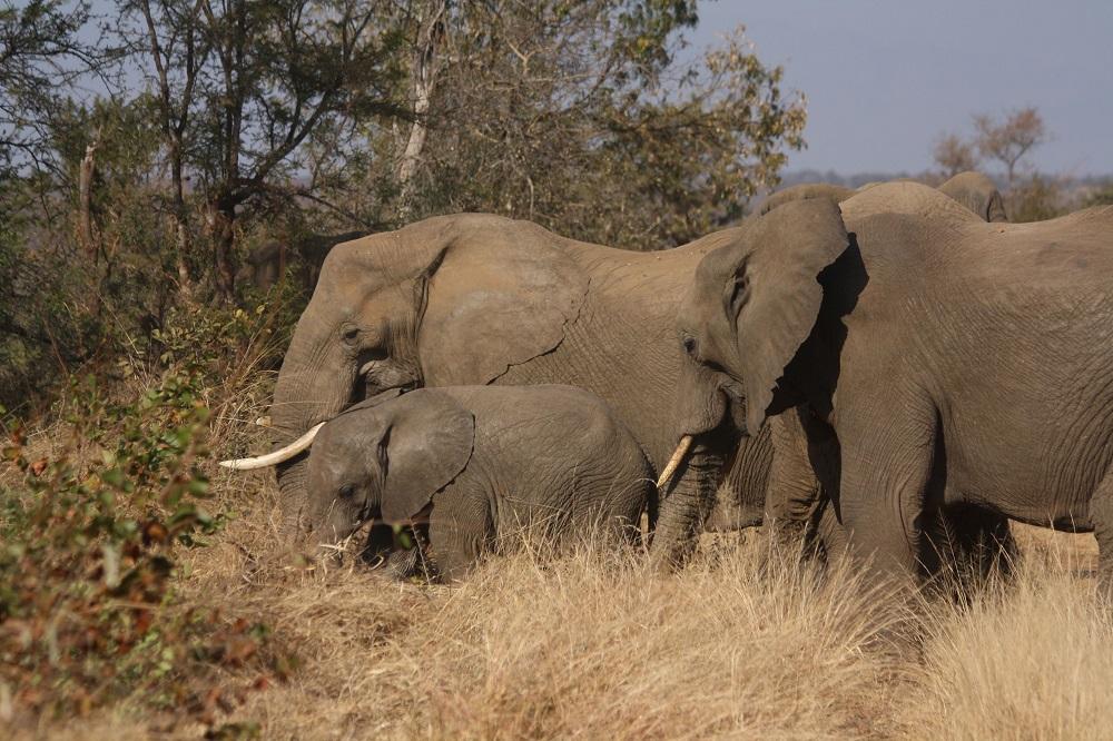 Garonga Safari Camp, Safari Camp Stories, Safari Camp, Africa Safari Camp, Wild Safari, Big 5 Safari