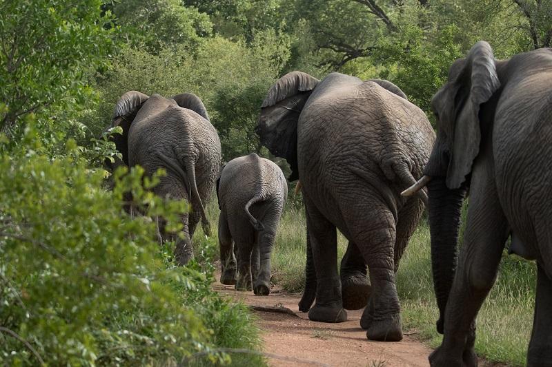 Safari Camp Stories: The Last Decade, New Beginnings