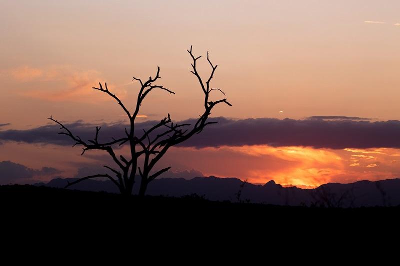 IUCN Red List, Garonga Safari Camp, Safari Camp Stories, Luxury Safari Camp, South African Safari Camp