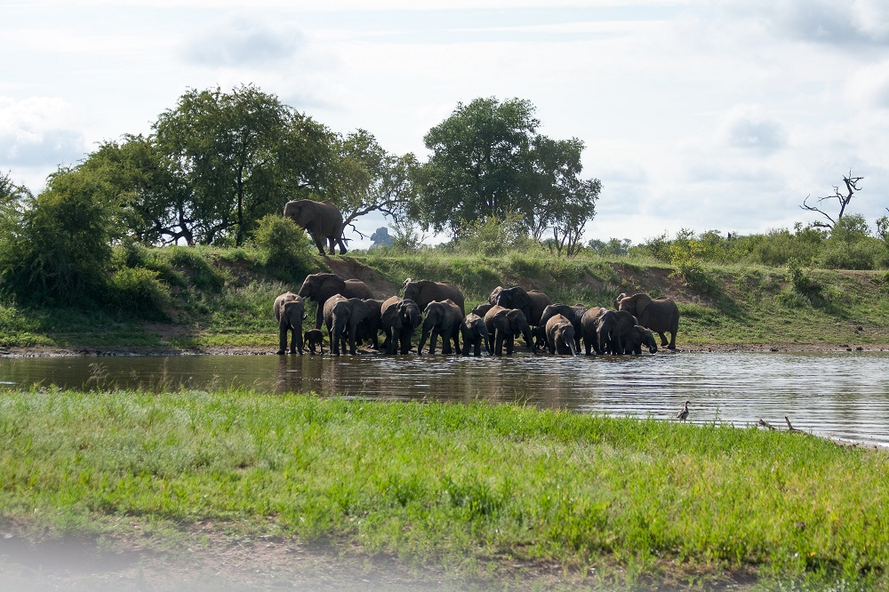 Garonga, Safari Camp, Big 5 Safari, Elephants Swimming