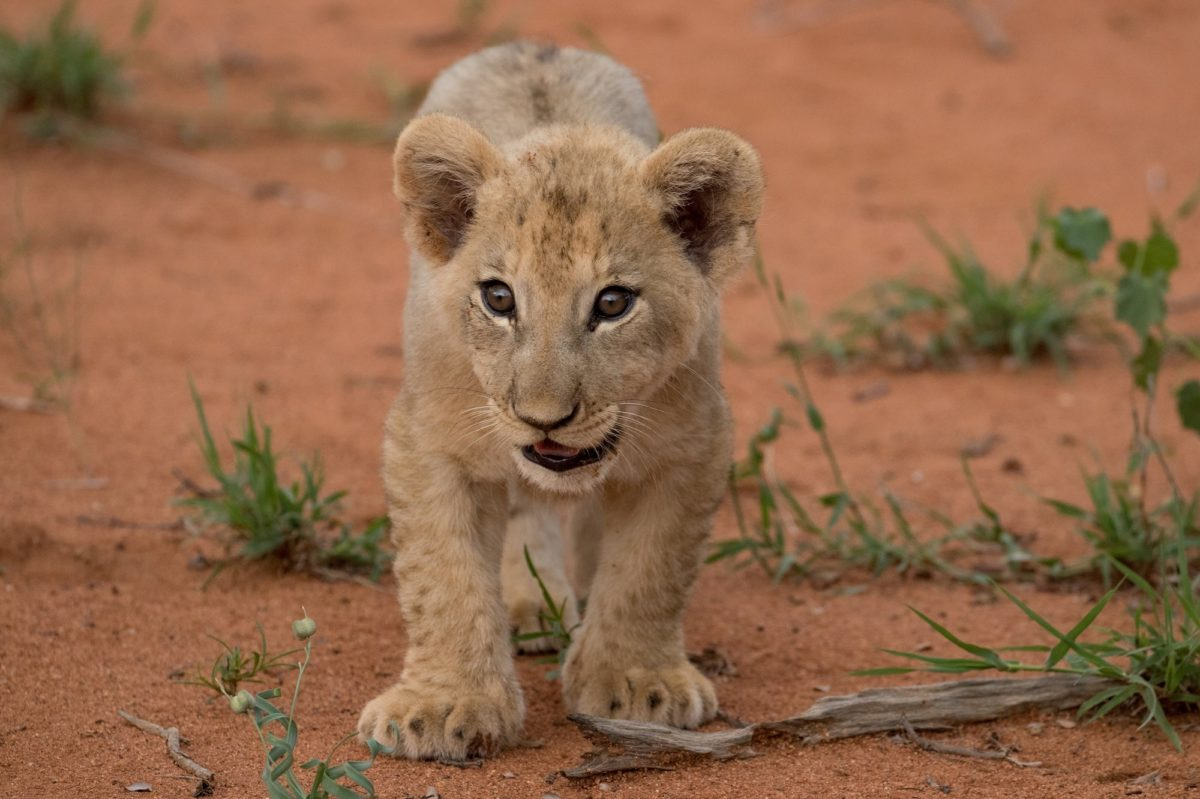 The Animal Babies of the Greater Makalali Private Game Reserve