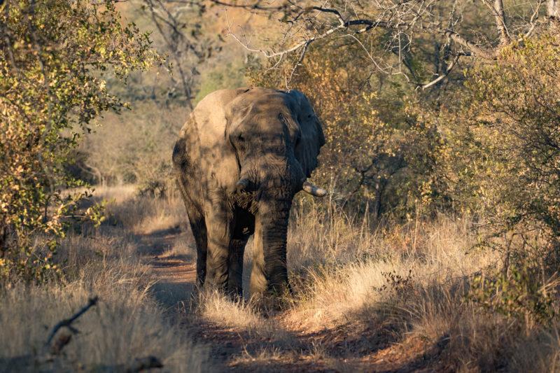 Elephant, Big 5 safari, Luxury Safari, Holidays in South Africa
