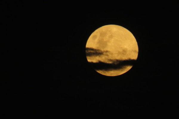Full Moon, Luxury Safari
