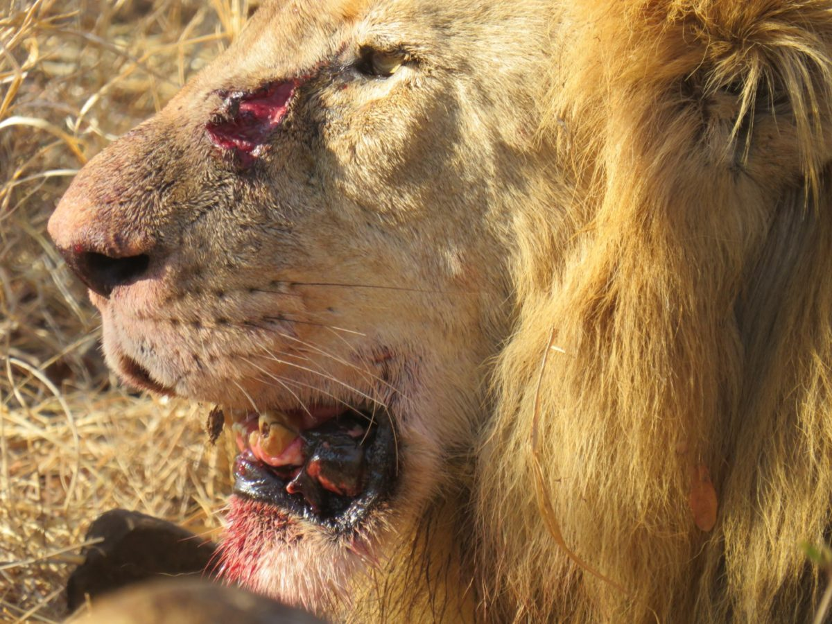 The Garonga Diaries: A Feast For The Lions