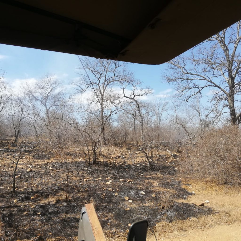Fire in the Makalali Conservancy