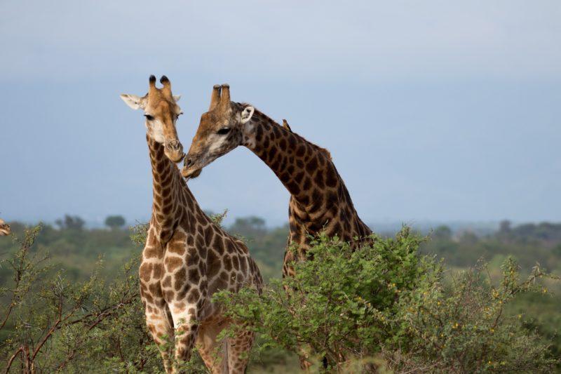 Safari Camp Stories: Tall Tales with Johnson