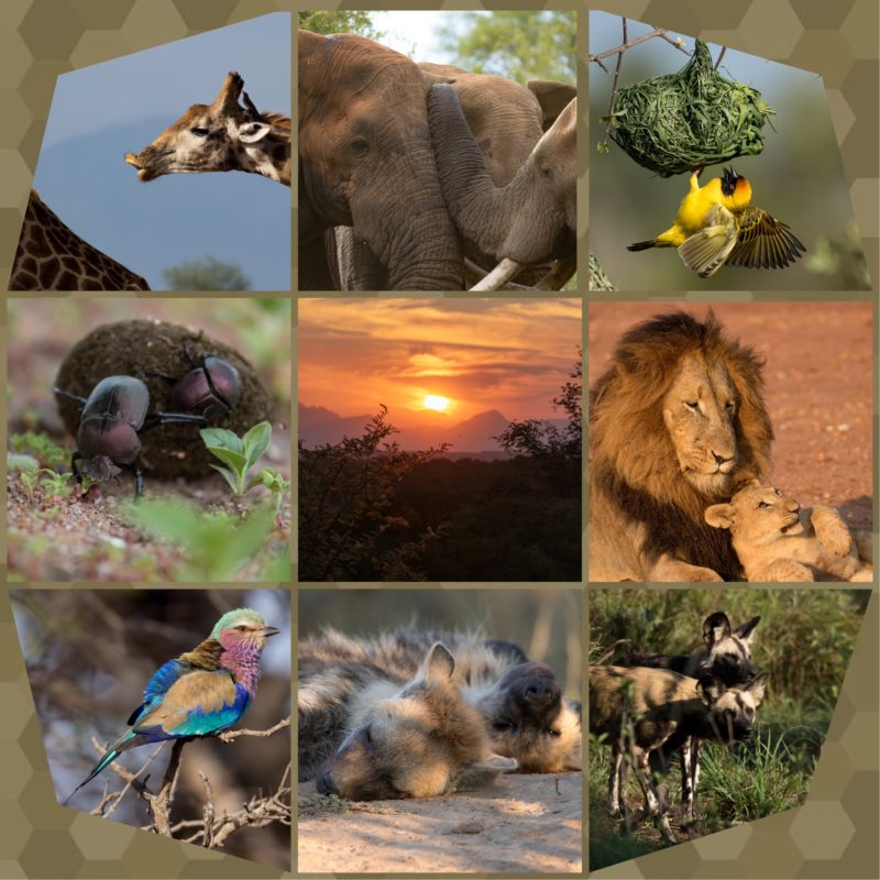 Safari Camp Stories: Can you feel the love tonight?
