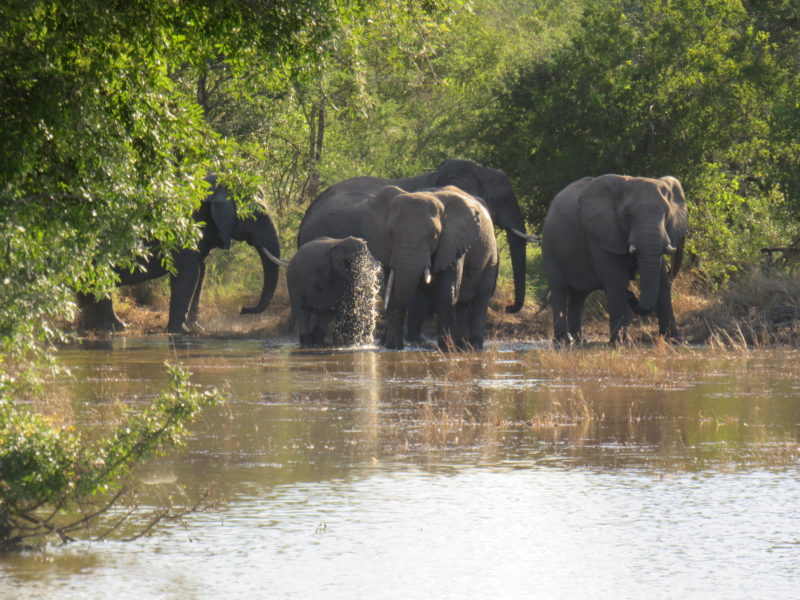 Safari Camp Stories: Elephants taking a dip with Johnson