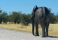 Private luxury tours Namibia and Botswana